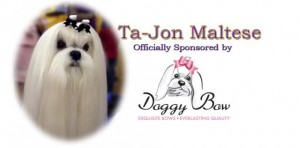 Ta-Jon Maltese sponsored by Doggybow